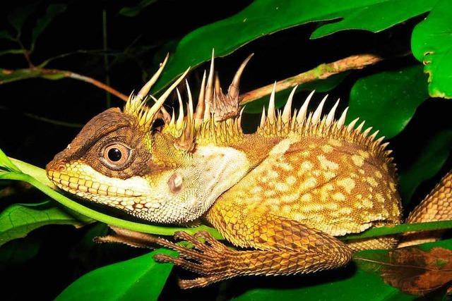 Forscher entdecken rund um den Mekong skurrile Tiere