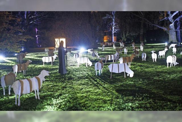 Schafe und Hirten im Park des Basler Claraspitals