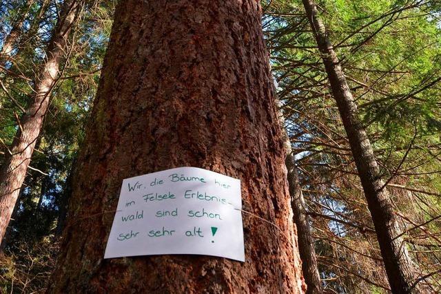 Motorsäge soll das Problem des Waldkindergartens lösen
