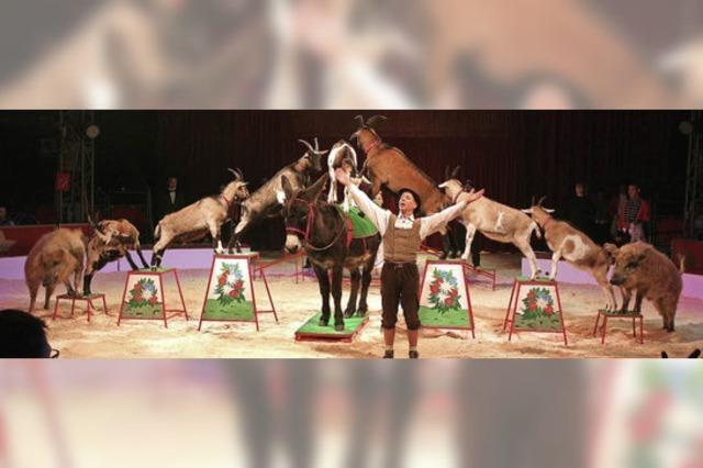 Ein Circus für jeden Geschmack