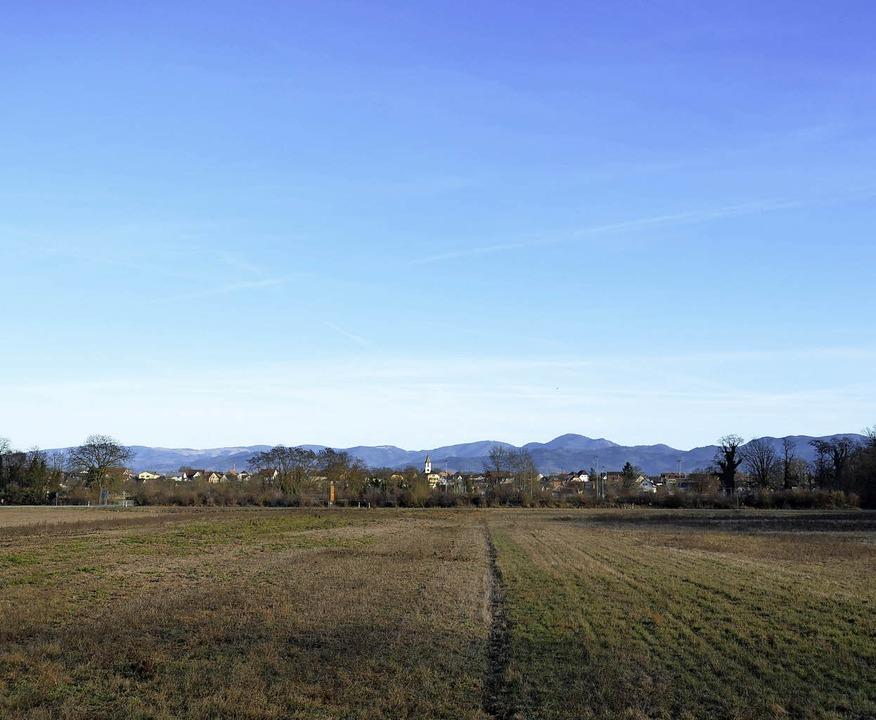 Auf diesem Grundstück auf der Gemarkun...oll das Kies-Zwischenlager entstehen.   | Foto: Susanne Ehmann