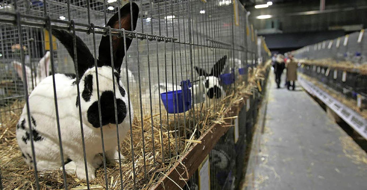 Die Ortenauhalle wird am 6. udn 7. Januar zum gigantischen Kaninchenstall.   | Foto: Chris Heck