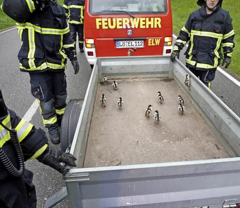 Tierisch gut war die Rettungsaktion der Feuerwehr für eine Gänsefamilie  | Foto: bz
