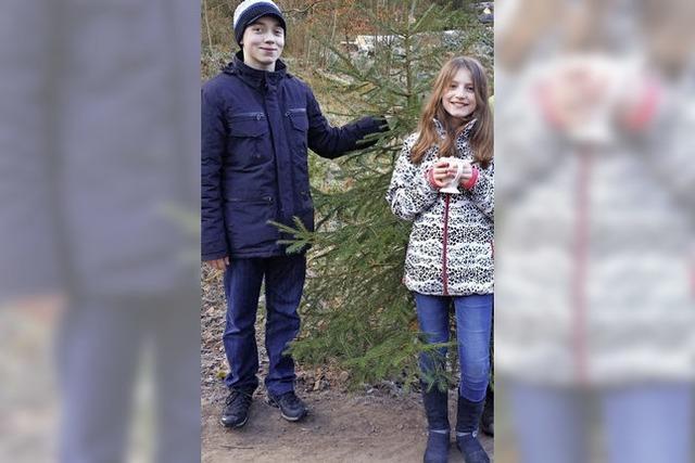 Tannensuche im Wald