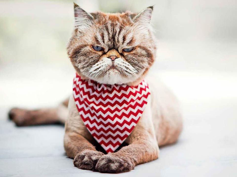 Katzencontent geht immer auf Facebook....nsere Leser auf Facebook bewegt haben.    Foto: Lisa Charbonneau (Fotolia)