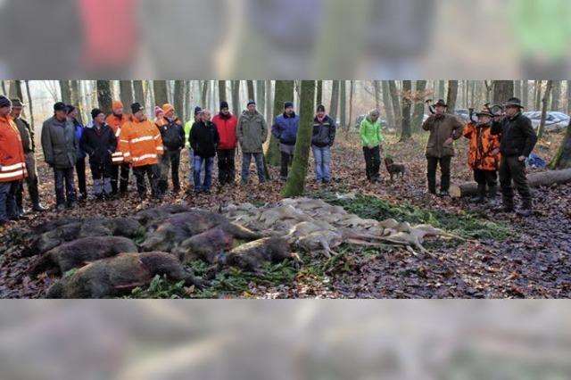 Jäger erlegen zehn Wildsauen, fünfzehn Rehe und einen Fuchs