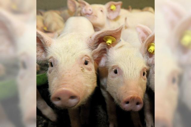 Aldi und Rewe bringen Landwirte und Schlachthöfen unter Druck