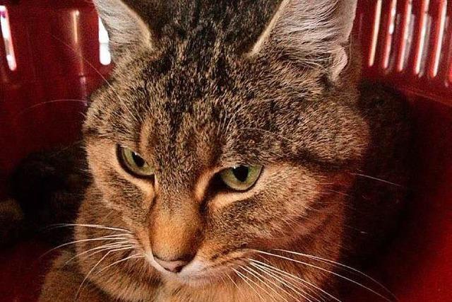 Wer hat die junge Tigerkatze mit dem Schrotgewehr erschossen?