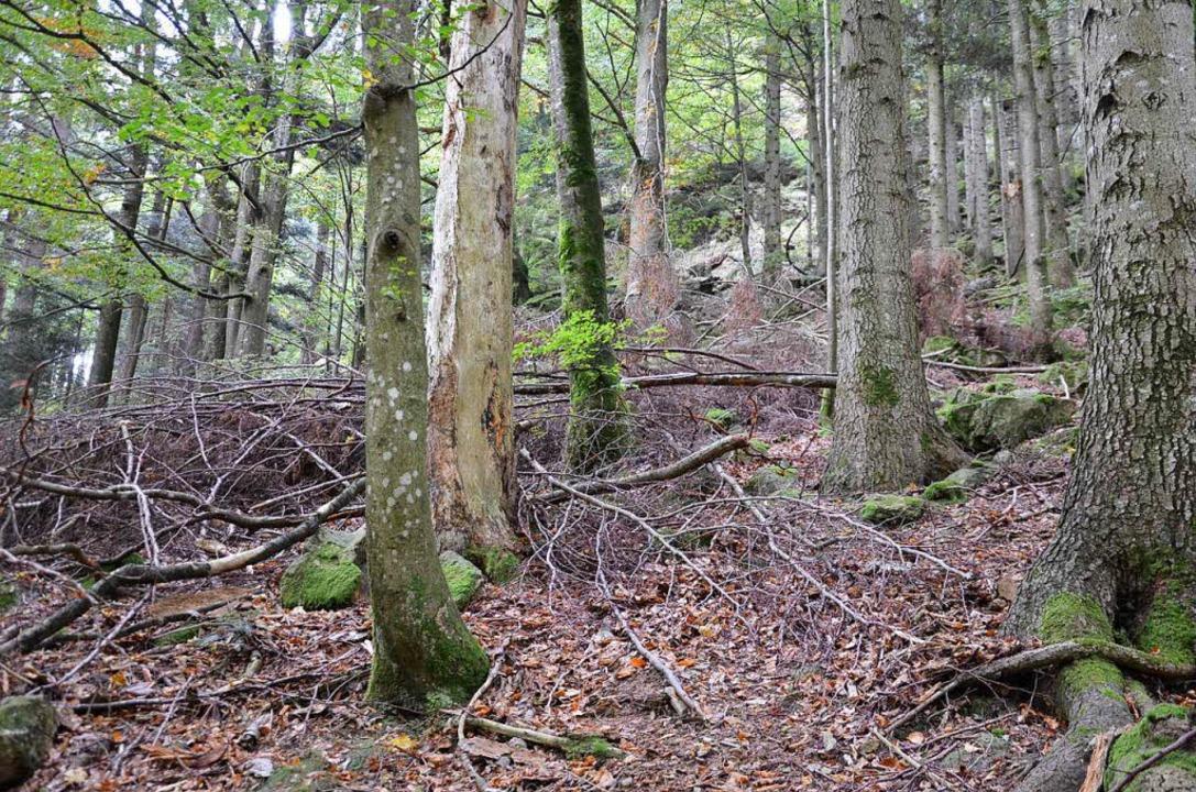 Tote Bäumen dienen zahlreichen Arten als Lebensraum.    Foto: Alexandra Wehrle