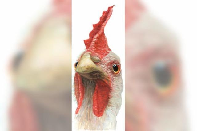 Laut einer neuen Studie ist das Huhn schlauer als gedacht