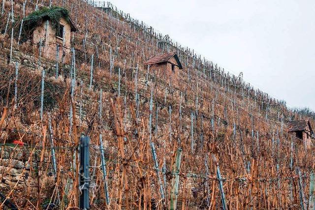 Mehr Gelder ab 2018 für Weinbau in Steillagen