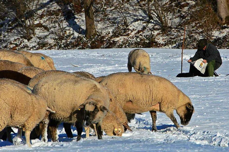 Winterimpressionen – festgehalten von BZ-Lersern im Dreisamtal und in den frühen Morgenstunden auf dem Schauinsland. (Foto: Stefan Bohnenkämper)