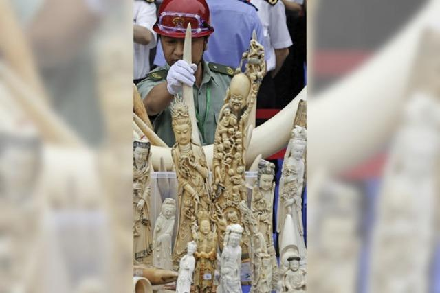 China stellt den Handel mit Elfenbein unter Strafe