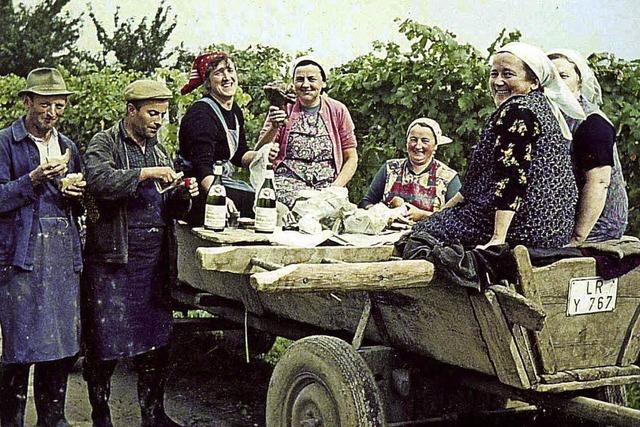 Vor 50 Jahren gründeten Winzer die WG Oberschopfheim