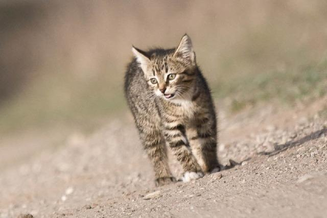 Tierschützerinnen schaffen Zuhause für streunende Katzen