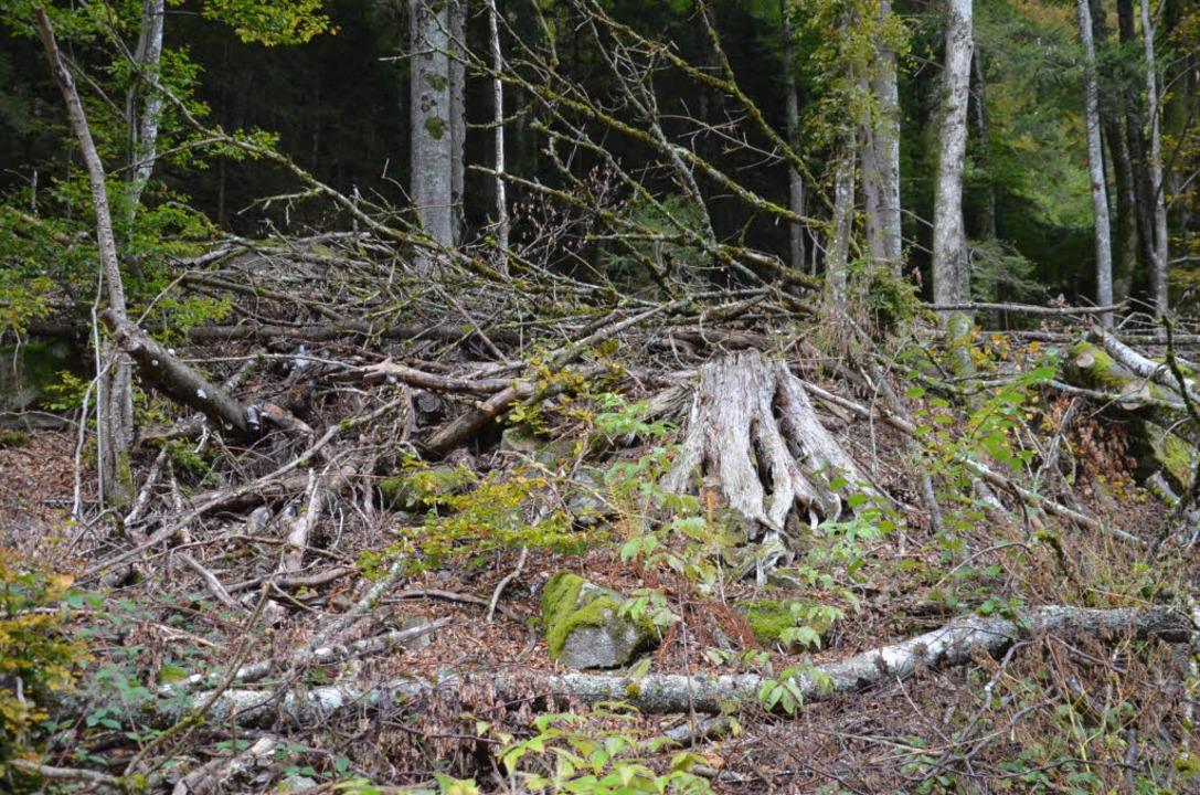 Umgestürzte Bäume: Egon hat gewütet (Symbolbild).  | Foto: Alexandra Wehrle