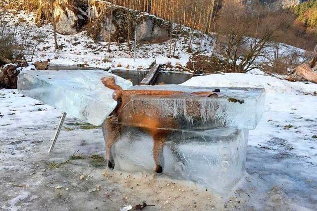 Fuchs im Eisblock: Jäger findet tiefgefrorenes Tier in der Donau