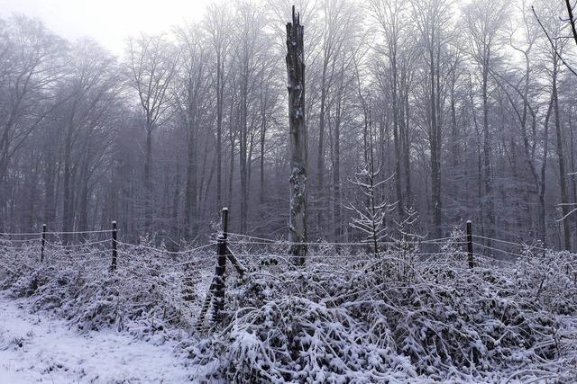 Der Wald steht still und