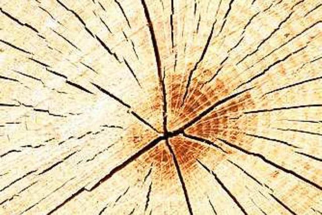 Südbadisches Holz reist bis nach Japan