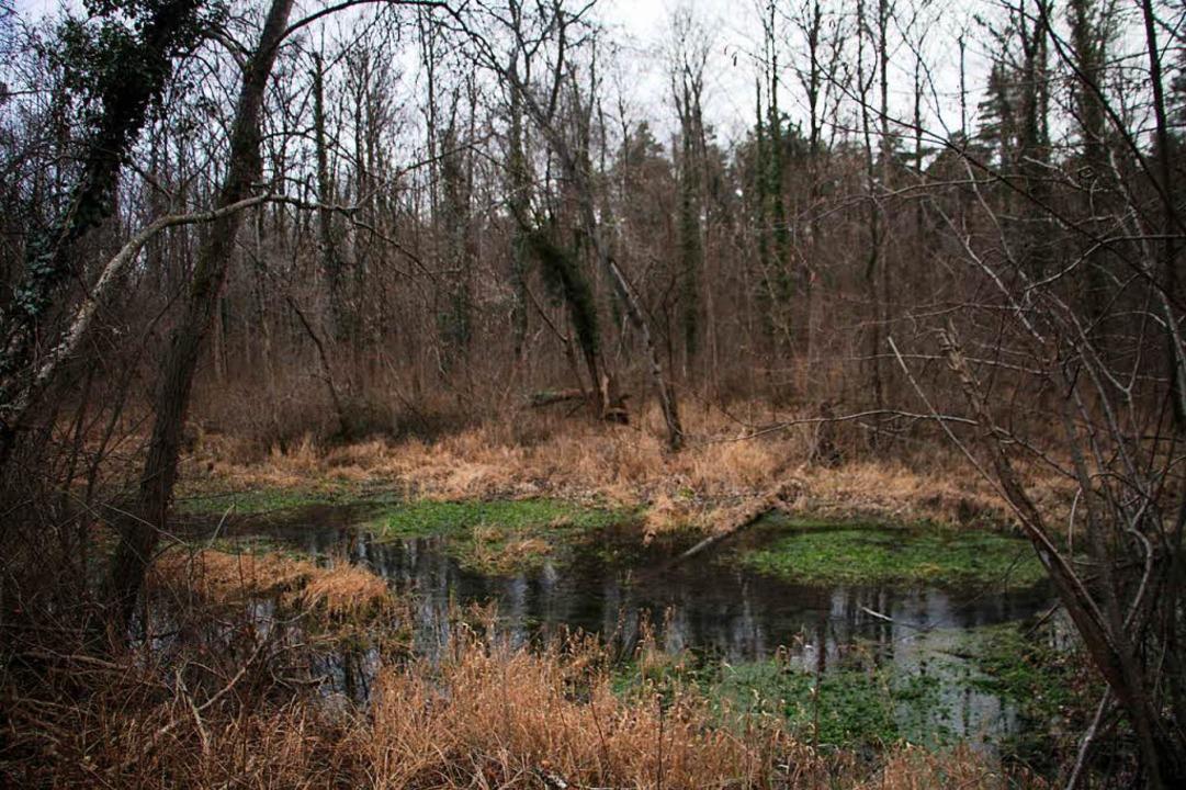 Ökologisch fluten will das Regierungsp...tsburg und Bürger wehren sich dagegen.  | Foto: Herbert Trogus