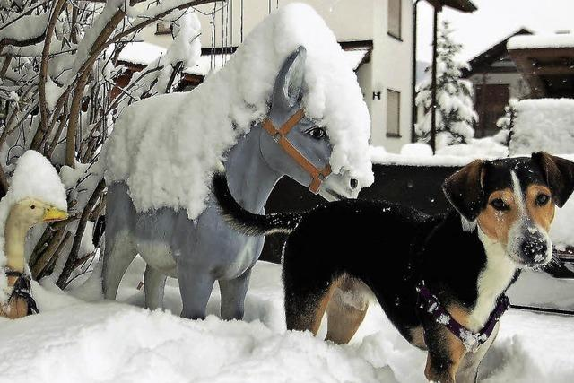 Tierischer Winter in Hausen
