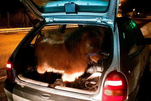 Pony im Kofferraum von Kleinwagen entdeckt