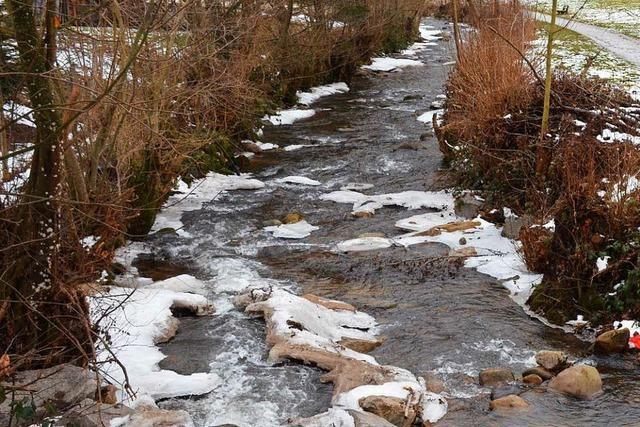 Quellen im Schwarzwald: Wasser ist derzeit so knapp wie im Sommer