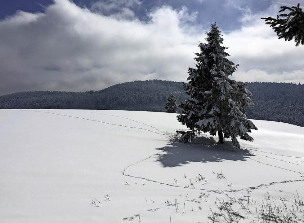 Herrenschwand, Schwarzwald  | Foto: Wolfram Köhli