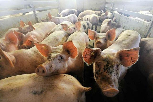 Nutztierhaltung: Bauern rufen zu Demonstrationen auf