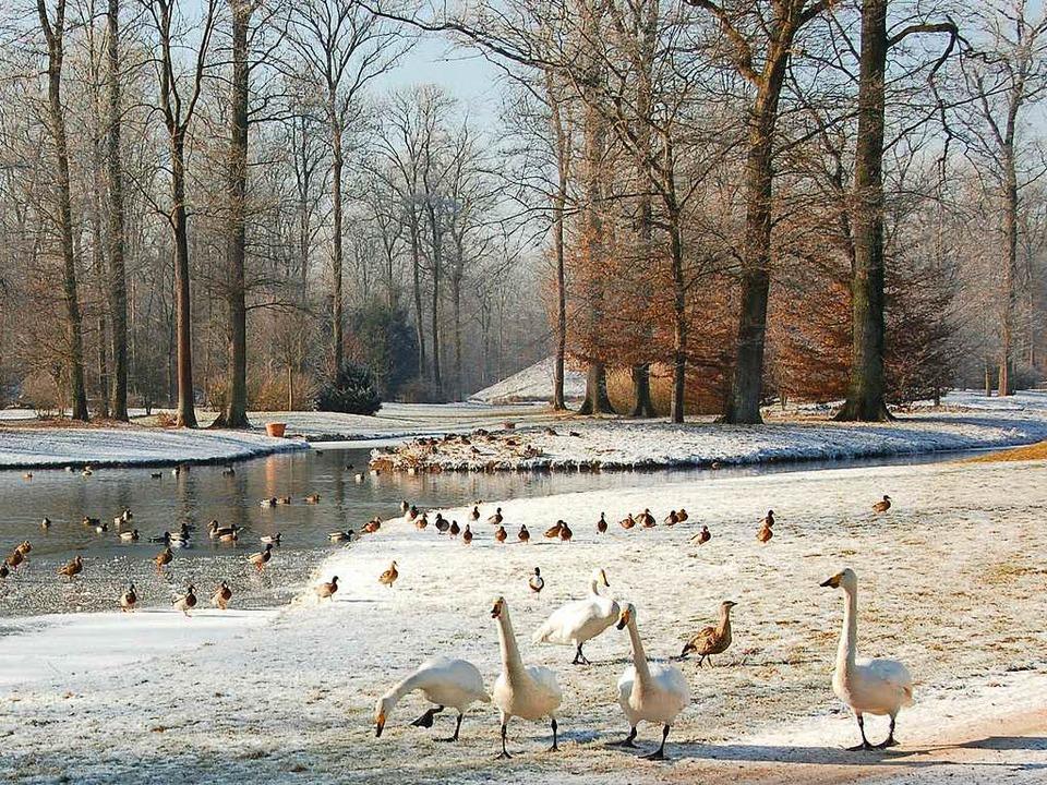 Soll zwangsversteigert werden: Der Queen-Auguste-Viktoria-Park im Umkirch  | Foto: Manfred Frietsch