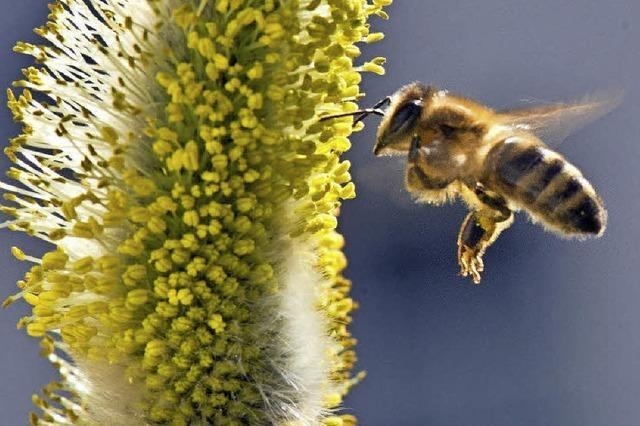 Geplant ist eine Präsentation rund um die Biene