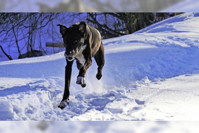 Hundsgemeine Kälte