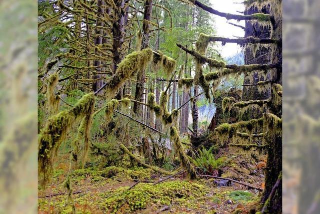 FLUCHTPUNKT: Wo die Bäume Pelzmäntel tragen