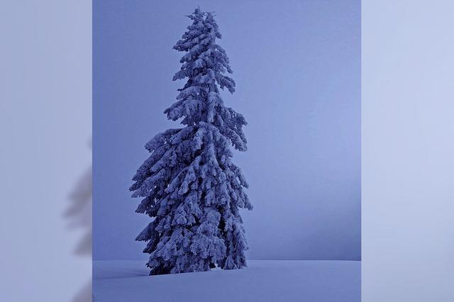Winter am Stübenwasen