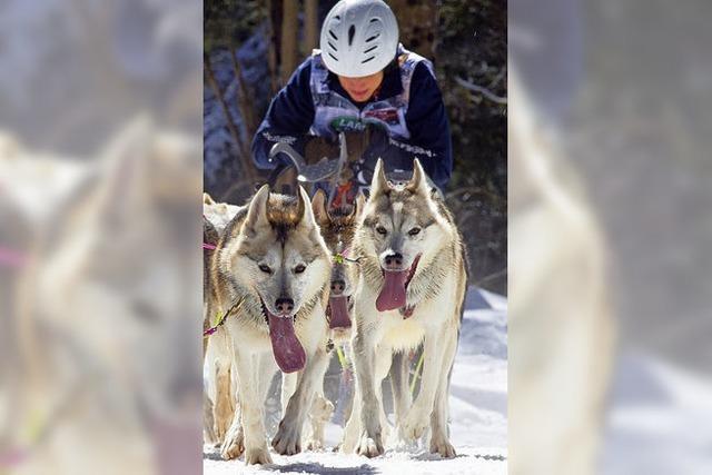 Tiere können Rennen kaum erwarten