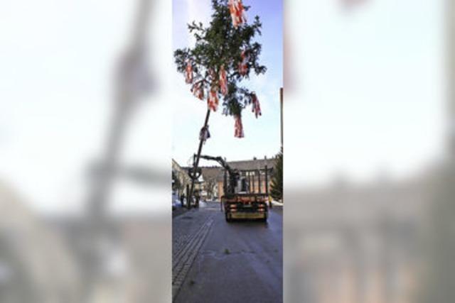 Narren stellen 30 Meter hohen Baum