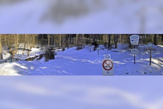 Querfeldein durch den Winterwald – das geht gar nicht