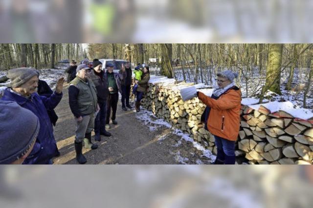 Scheite, Stämme und eine Skulptur bei der Holzversteigerung in Waltershofen