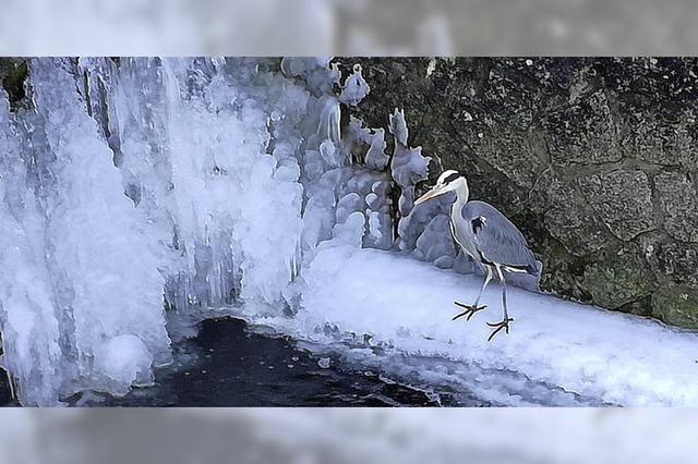 Vorm Ende der Eiszeit