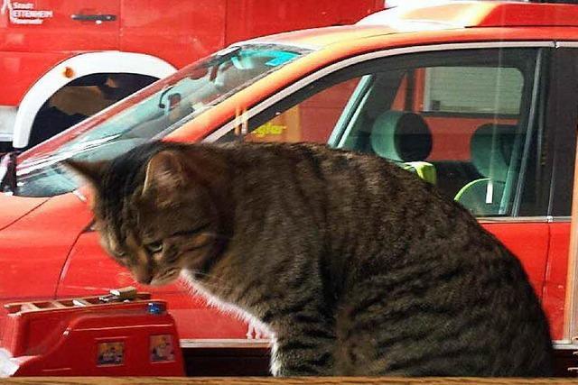 Feuerwehr rettet festgefrorene Katze mit Heizstrahler