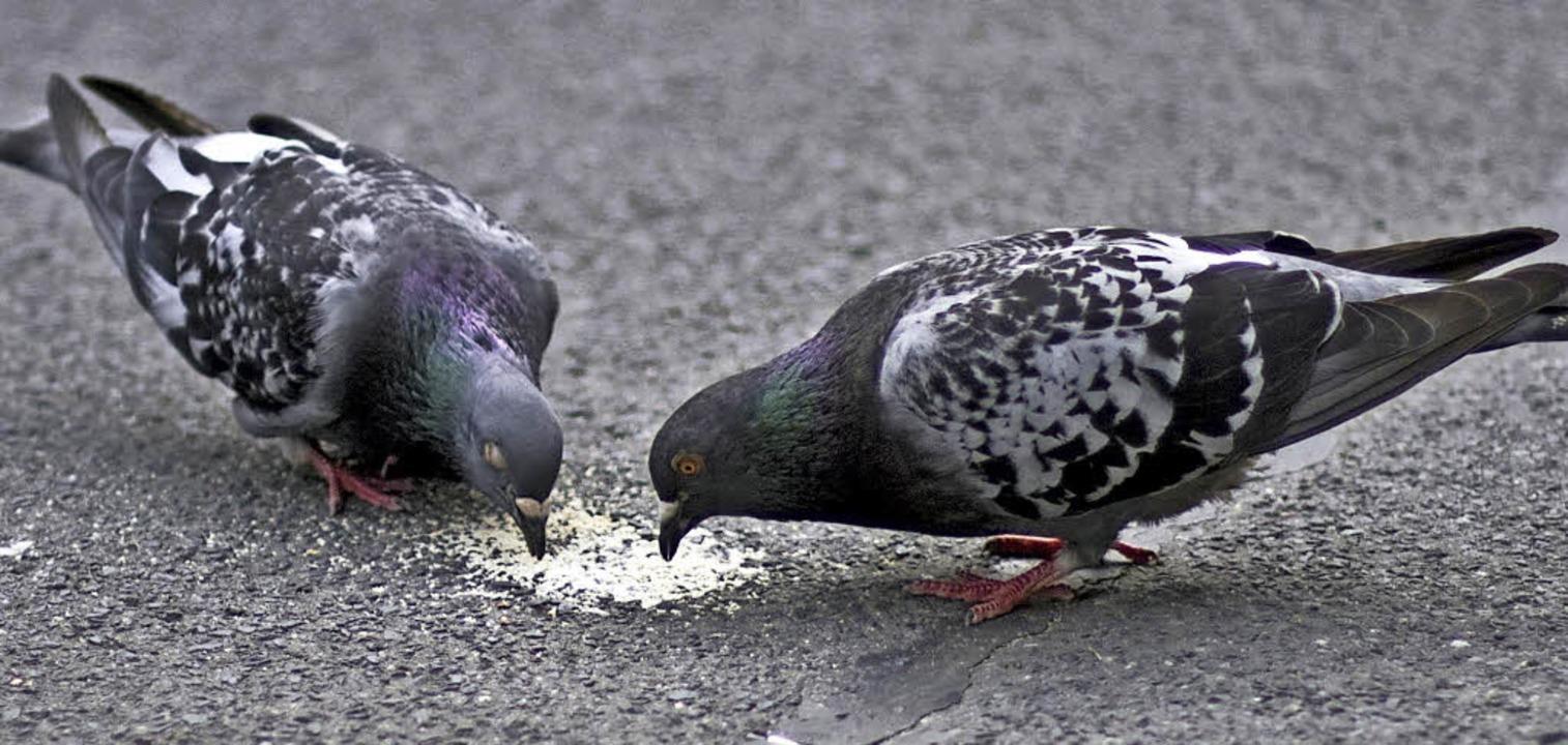 Füttern verboten: Weil er Tauben etwas...hlte, steht ein  Mann nun vor Gericht.    Foto: photocase/Annette Heines