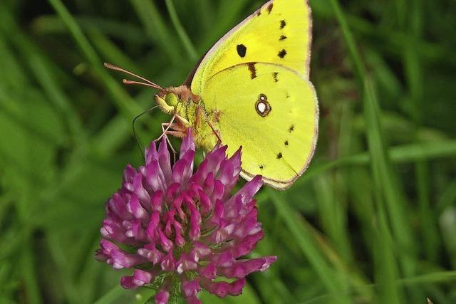 Die Vielfalt der Schmetterlinge. Vortrag im Gemeindezentrum St. Blasien am Donnerstag, 9. Februar, um 190.30 Uhr.