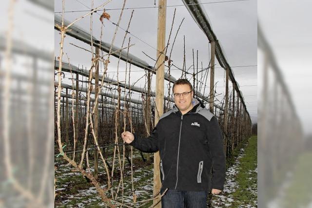 Der Huttinger Kevin Brändlin hat eine neue Anbaumethode für Kirschen entwickelt