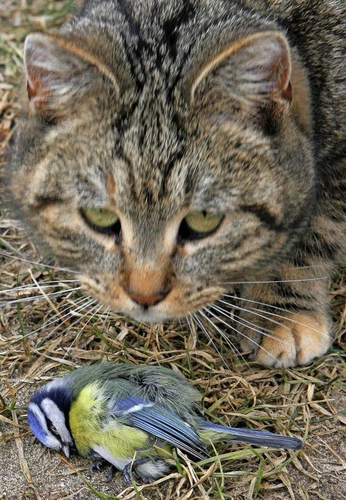 Die Katze hat ein Meise erbeutet.  | Foto: Patrick Pleul (dpa)