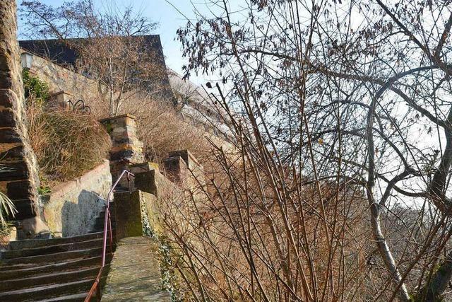 Weitere Hang- und Felsflächen am Breisacher Münsterberg sollen gesichert werden