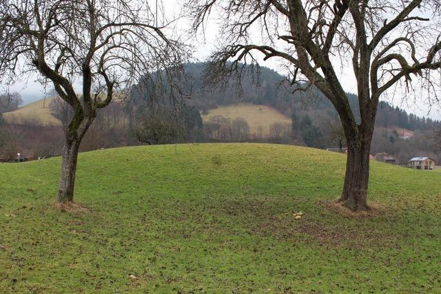 Reste einer Burg stoppen ein geplantes Baugebiet