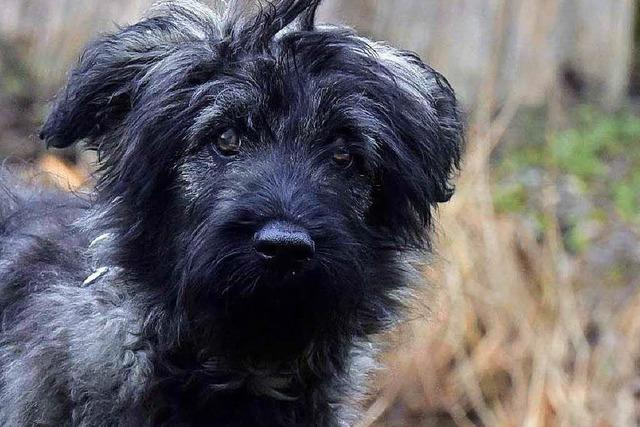 Hund Anton wurde ausgesetzt – im Tierheim Freiburg wird ihm geholfen