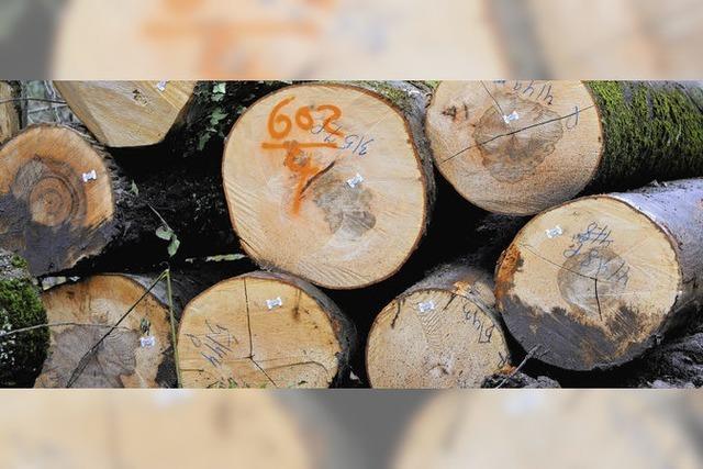Wald wirft Gewinn ab