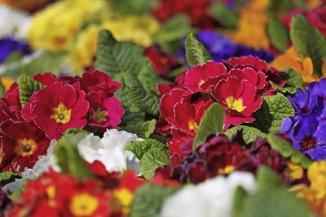 Landfrauen lassen Blumen sprechen
