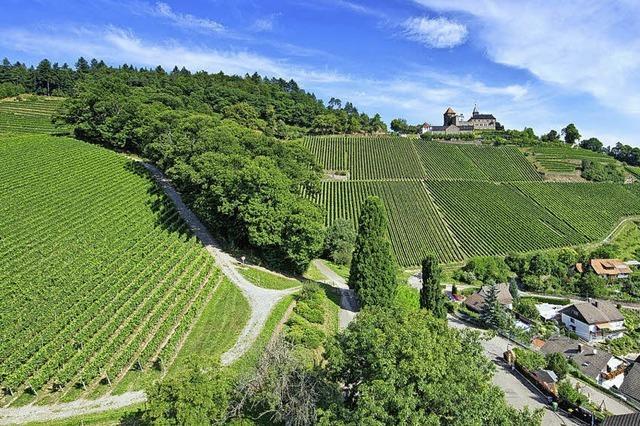 Weinparadies Ortenau will mit Werbung punkten